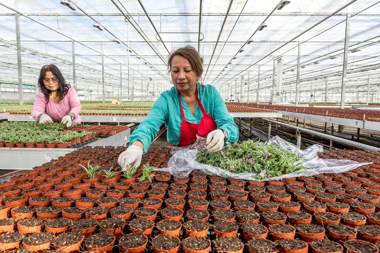 Smit Kwekerijen bloeit op door passie en strategie
