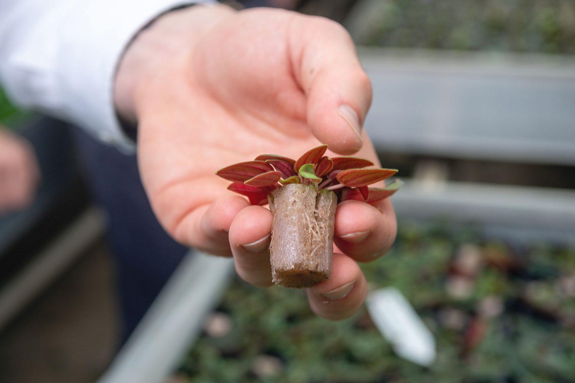 Bioschuim neemt de plek van potgrond in
