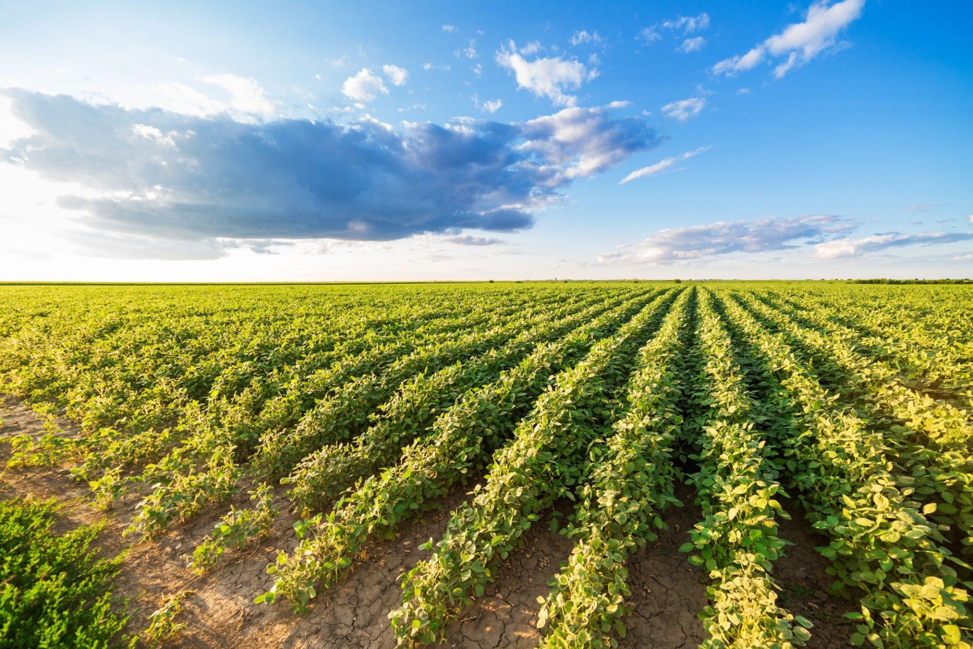 Bouw met het Business Innovation Program Food een nieuwe businesscase