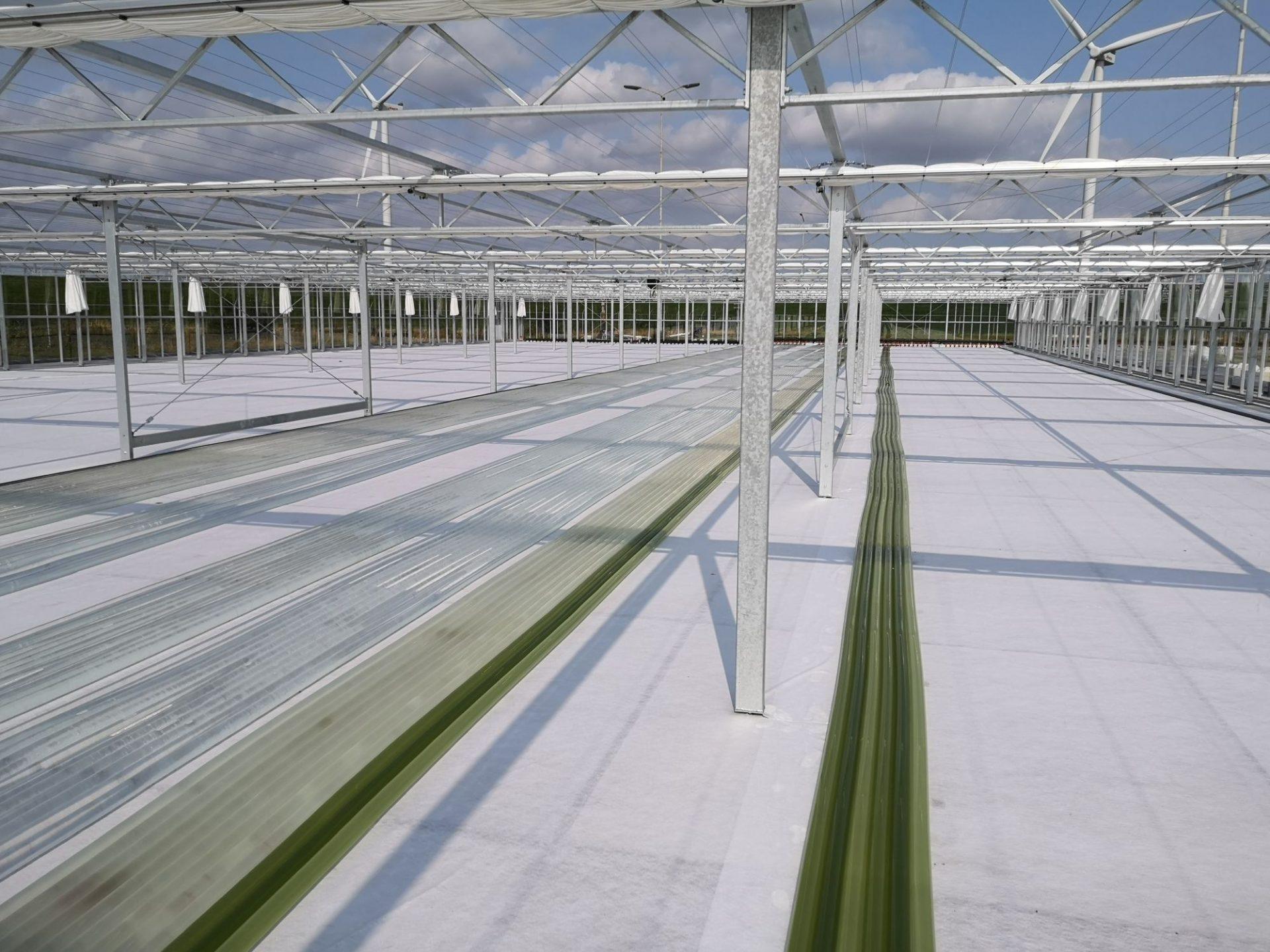 Photanol wil boost geven aan groene chemie
