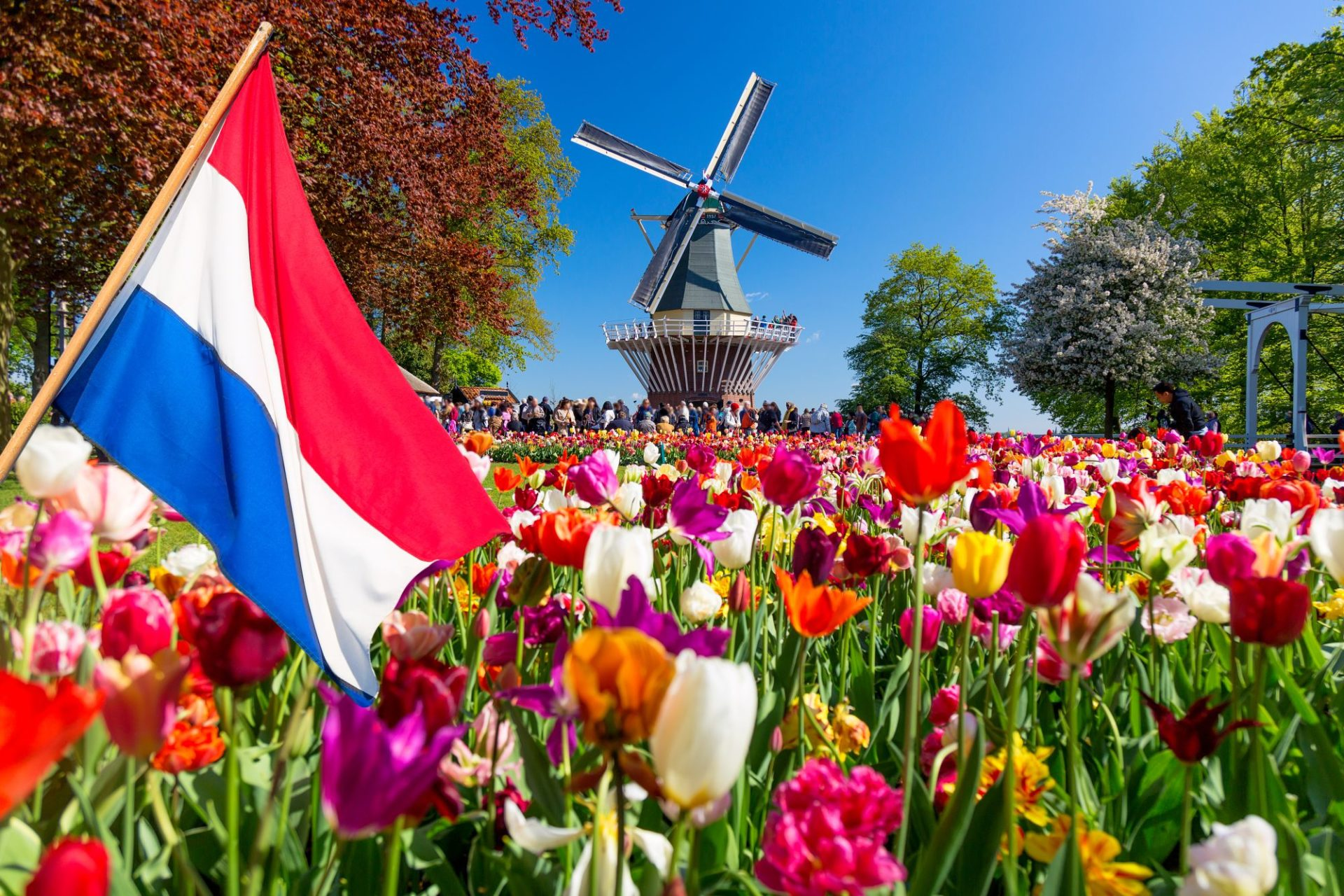 Coronavirus and Brexit impact the arrival of foreign companies to the Netherlands in 2020